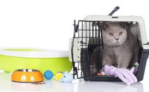 Guideline on How to Save For Your Pet Supplies