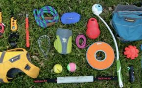 Helpful Dog Training Tools